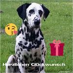 Elexa vom Furlbach gratuliert zum Geburtstag...14.02.2018