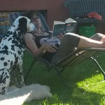 Blade vom Furlbach beim lesen mit Frauchen...28.05.2017
