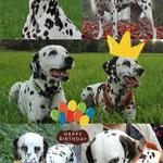 Just Bonny vom Furlbach gratuliert zum Geburtstag...15.02.2018