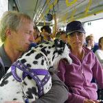Anny-Chamei vom Furlbach ein Schoßhund vor ein paar Jahren im Urlaub beim Busfahren...