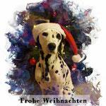 Ida Indiana vom Furlbach Dezember 2016