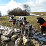 June Carter vom Furlbach, Tante Cassiopeia vom Sayner Schloß, Just Bonny vom Furlbach und Freundin...12.02.2018