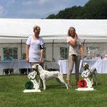 Somora´s Karamel Kiss mit Doghandler Anni auf der Ausstellung in Horn Bad Meinberg erreichten ein V2 Res. CAC in der Zwischen Klasse...09.07.2017