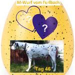 Tag 46 der Trächtigkeit des M-Wurf vom Furlbach 24.06.2019