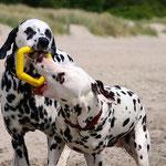 Good Boy Emil vom Furlbach und Heidi HoneyBee vom Furlbach...11.06.2017