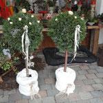 meine Bäume für eine Feier dekoriert. Gegen einen kleinen Unkostenbeitrag können die gerne ausgeliehen werden.