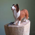Lassie Multitalent