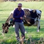 こんなに間近に牛が迫ってきたも動じません。