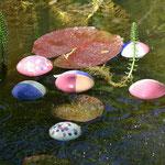 Wasserlinsen