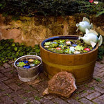 Brunnenromantik im Hof