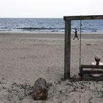 Schönstes Bild, am Strand von Tybee Island bei Savannah, Georgia