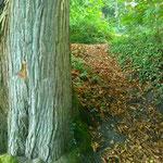 forêts Christelle Lefait