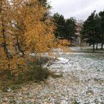 初雪!!枯葉と雪が同時に降る!?富士山並みの早さ