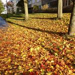 ストックホルムの秋
