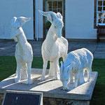 die Cashmere-Ziegen bei Johnstons of Elgin