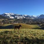 Urlaub in Kitzbühel