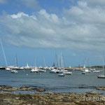 Yachthafen in Punta del Este