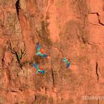 Grünflügelaras im Braco das Araras