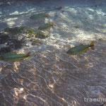 Impressionen vom Rio Sucuri