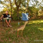vorwitziger Rotfußseriema am Camping do Gordo