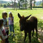 """ALT=""""Kinder mit Esel"""""""