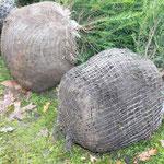 Hanggarten Heckenexperiment Vergleich der Ballen
