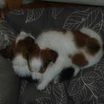 Benaja und Kimba beim Schönheitsschlaf