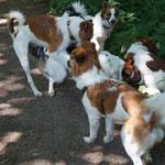 Bailey und ihre Sprösslinge