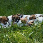 Hundehaufen mitten auf der Wiese......:-)