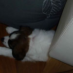 Baisy muß neben dem Crunchy schlafen!