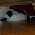 Und Brandy liegt unter dem Sofa