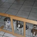 Zustände wie im Gefängnis