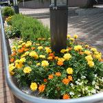 集会所前の花壇