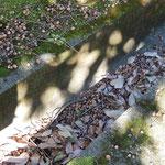 溝は落ち葉やドングリでぎっしり埋まっている