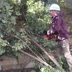 木を切り倒して、枝を払い