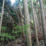 ②雪や風に弱い密集したモヤシ状態の人工林、土壌の浸食、土砂崩落の危険も