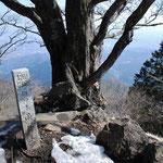 ③山頂の御神木、貫録のあるブナの老木、山麓の相模平野に恵みの水をもたらす「雨降木」としても有名(神奈川県伊勢原市)