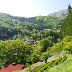 ⑤広葉樹に囲まれた山村集落、神奈川県は自然林が6割と比較的多く残っています(神奈川県相模原市)