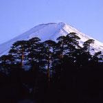 ①山麓のアカマツ林の背後に吉田大沢、この左側にある吉田口登山道で富士山頂を目指す(富士吉田市)