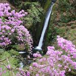 ③東京都奥多摩町、多摩川の支流海沢に注ぐ小さな滝、秩父多摩甲斐国立公園には、美しい無名の滝も多い
