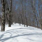③幅広い尾根に広がるブナ林、樹影がくっきり