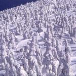 ②北八甲田山の樹氷、冬の強い季節風にさらされて、アオモリトドマツは様々なモンスターに変身、十和田八幡平国立公園(青森県青森市)