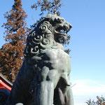 ②御嶽神社の狛犬、神の使いとして狼を祀っているので、狼の雰囲気が漂う(東京都青梅市)