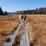 ⑤晩秋の尾瀬沼、冷え込みが厳しい朝、湿原の植物が霜におおわれて朝日に輝く。