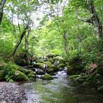 ①北海道狩場山域の渓流、日本のブナ林の北限に近い狩場山域は、豊かな自然林が残っており、安定した水と清浄な空気を供給しています。