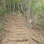 手入れされた登山道