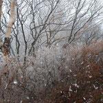 ①最高峰黒檜山頂(1927m)のツツジやダケカンバに付着した霧氷