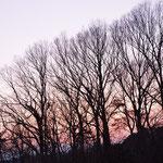 ⑥冬枯れの雑木林、コナラ、クヌギなどが生育する都市近郊の里山、子どもたちの駆けまわる遊び場(神奈川県横浜市)