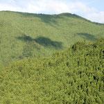 ②見渡すかぎりの人工林、紀伊半島は人工林の比率が6割と特に高い地域、生きものには厳しい環境(奈良県)