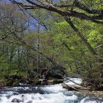 ①早春の奥入瀬渓流、十和田湖に注ぐ雪解け水が、奥入瀬川に流れ込み、田畑をうるおすことに